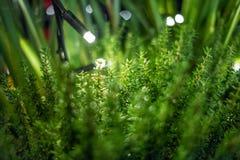 Fond magique de plante verte avec des lampes-torches Images stock