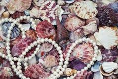 Fond marin élégant avec les coquilles colorées du sha différent photo libre de droits