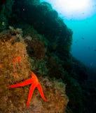 Fond marin avec la roche avec le corail images stock