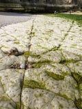 Fond marin pierreux sur une marée basse Images stock