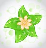 Fond mignon d'eco avec les lames et la fleur de vert Photographie stock