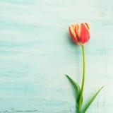 Fond minimal floral de couleur en pastel de tulipe de Pâques de ressort Photos libres de droits
