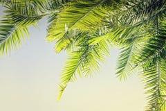 Fond modifié la tonalité de palmettes de lumière du soleil avec l'espace de copie photographie stock libre de droits