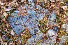 Fond Morceaux de glace sur les feuilles brunes Image stock