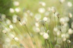 Fond mou d'usine d'herbe images libres de droits