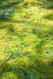 Fond moussu de plancher de forêt naturelle Photo stock
