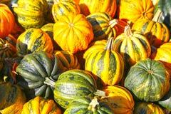 Fond multicolore de récolte d'automne de potirons photo stock