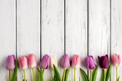 Fond multicolore de tulipes Image libre de droits