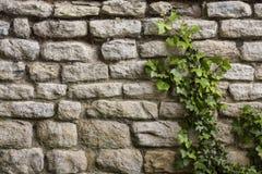 Fond - mur en pierre antique - lierre Photographie stock