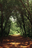 Fond mystérieux de tunnel de forêt Photos stock