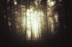 Fond mystérieux foncé de forêt avec le brouillard Image libre de droits