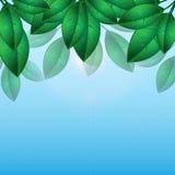 Fond naturel Illustration Libre de Droits