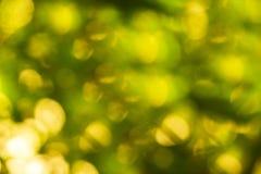 Fond naturel abstrait ensoleillé là ont un bon nombre de réflexion du soleil et le fond est vert Photos libres de droits