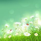 Fond naturel avec des fleurs Photographie stock libre de droits