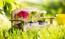 Fond naturel avec des fleurs Images libres de droits