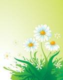 Fond naturel avec la marguerite Photo stock