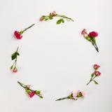Fond naturel créatif de fleur Images stock