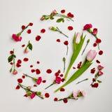 Fond naturel créatif de fleur Images libres de droits