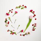 Fond naturel créatif de fleur Photo libre de droits