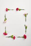 Fond naturel créatif de fleur Image stock