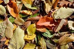 Fond naturel d'automne avec les feuilles tombées Photo libre de droits