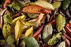 Fond naturel d'automne avec les feuilles tombées Photo stock