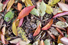Fond naturel d'automne avec les feuilles tombées Images libres de droits