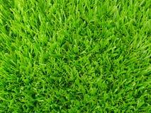 Fond naturel d'herbe verte Vue supérieure L'espace pour votre texte Concept écologique, Photographie stock libre de droits