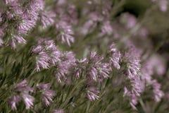 Fond naturel de Buch des fleurs colorées photographie stock libre de droits