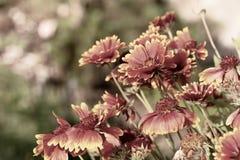 Fond naturel de Buch des fleurs colorées images libres de droits