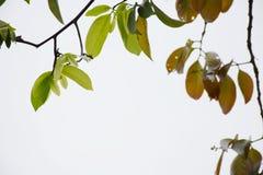 Fond naturel de jeunes brindilles impeccables de forêt de ressort images libres de droits