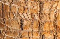Fond naturel de texture d'écorce en bois brune rugueuse de palmier Image libre de droits