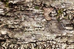 Fond naturel de vieille écorce de bouleau Images stock