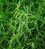 Fond naturel des baisses de tiges et de rosée d'herbe Images libres de droits