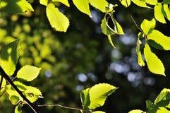 Fond naturel encadré par des feuilles image stock