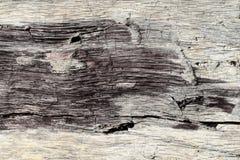 Fond naturel extérieur Modèle exclusif sur le bois endommagé du vieux tremble Fissures profondes, fibres brutes, couleurs origina image libre de droits