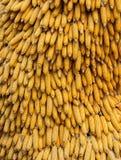 Fond naturel sec d'épis de maïs Image libre de droits