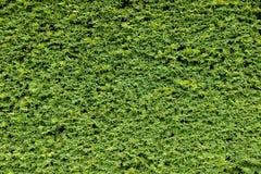 Fond naturel vert Images libres de droits