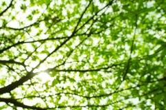 Fond naturel vert Images stock