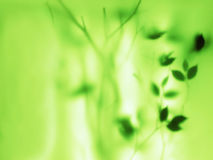 Fond naturel vert abstrait Photos stock