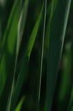 Fond naturel, vert-foncé Photographie stock libre de droits