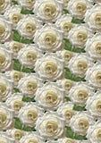 Fond noir avec de grandes roses blanches Photos stock
