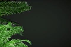 Fond noir avec des feuilles Photo libre de droits