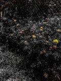 Fond noir avec des fleurs photos stock