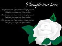 Fond noir avec la fleur Images libres de droits