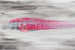 Fond noir avec la ligne rose l'espace libre Image stock