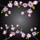 Fond noir avec le branchement de pommier illustration stock