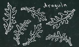 Fond noir de conseil Ensemble d'Arugula Rucola, Rocket Salad Fresh Green Leaves Herbe aromatique Ingrédient à cuire frais de sala Image libre de droits