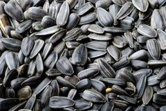 Fond noir de graines de tournesol Photos stock