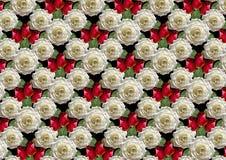 Fond noir de grandes roses blanches de bouquet et de bourgeons rouges Photographie stock libre de droits